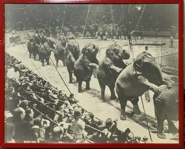 Rbbb elephant photo